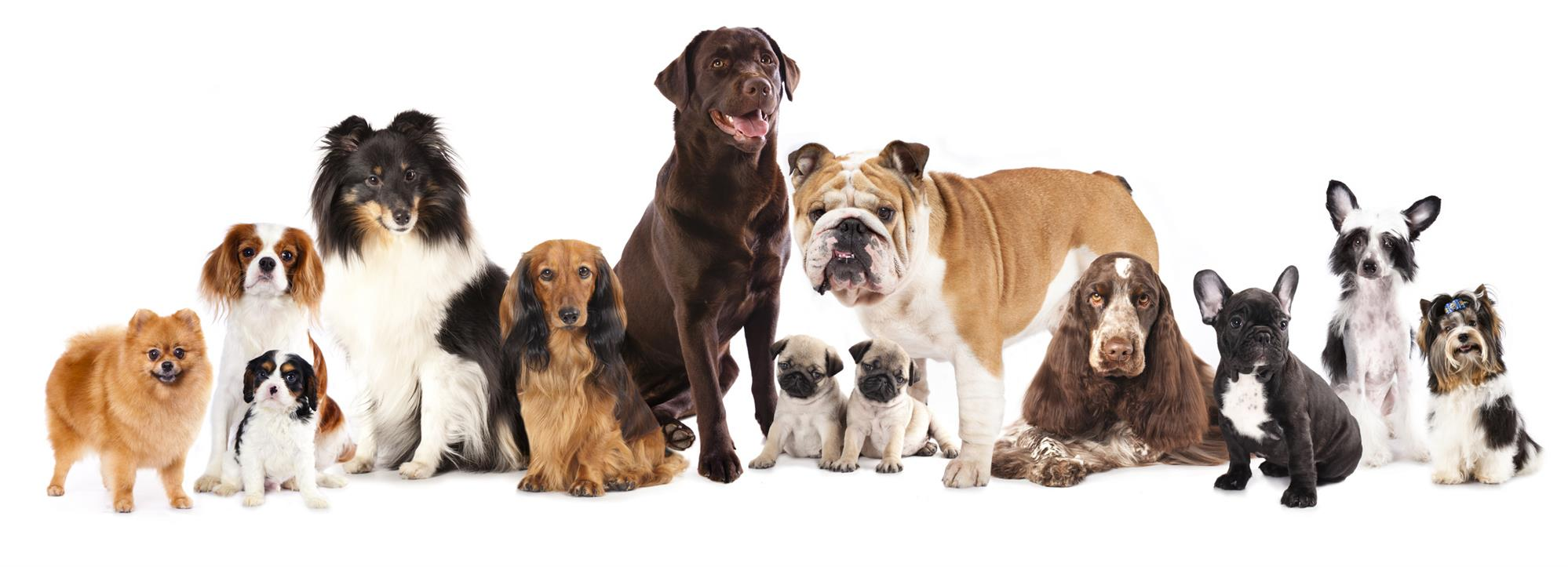 Different Dog Breeds from Different Ages